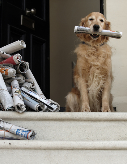 Golden Retriever carrying up to date relevant mill pensions news on auto-enrolment and trustee responsibilities
